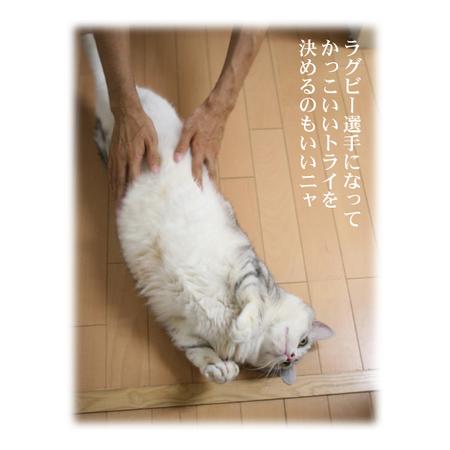 Yume2_1